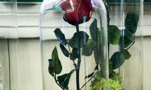 rosa eterna aries floristeriass